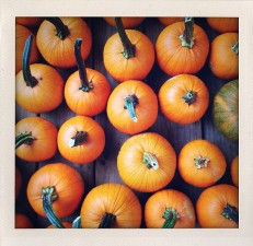 Pumpkin country